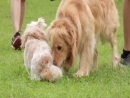 Programa Pet Amigo | Vida de Pet