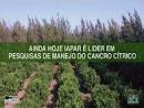 Pesquisas que viabilizaram a Citricultura no Paraná prosseguem em Xambrê