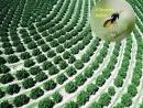 Parceria tecnológica faz combate biológico à principal doença da Citricultura