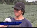 Agricultora monta horta irrigada com crédito da Fomento Paraná