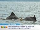 Portos do Paraná lança cartilha de proteção ao boto-cinza