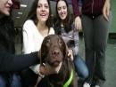 Cão Terapeuta | Vida de Pet