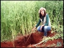 Experimentos de longa duracao em manejo de solo e plantas de cobertura