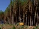 Marca Paraná - Setor Florestal